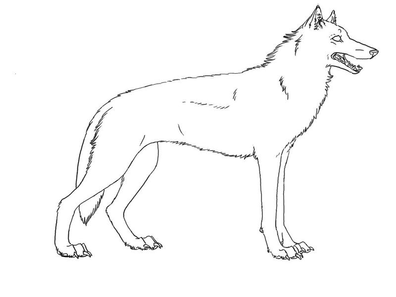 Simple Wolf Lineart : Wolf or dog lineart by zephyrwolfen on deviantart