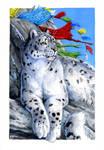Snow Leopard : Wild Cat Deck