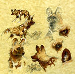 Wild dog sketch sheet