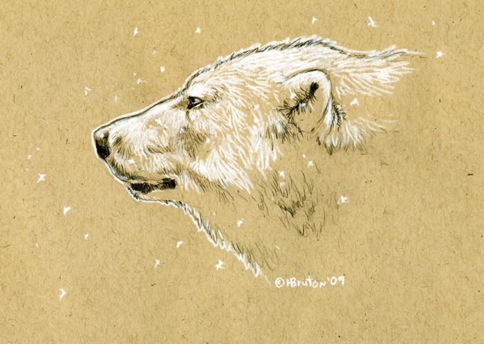 Brand-new Brown Paper Polar Bear Sketch by Hbruton on DeviantArt TN33