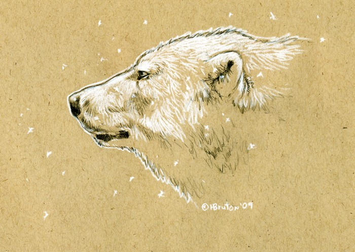 Brown Paper Polar Bear Sketch