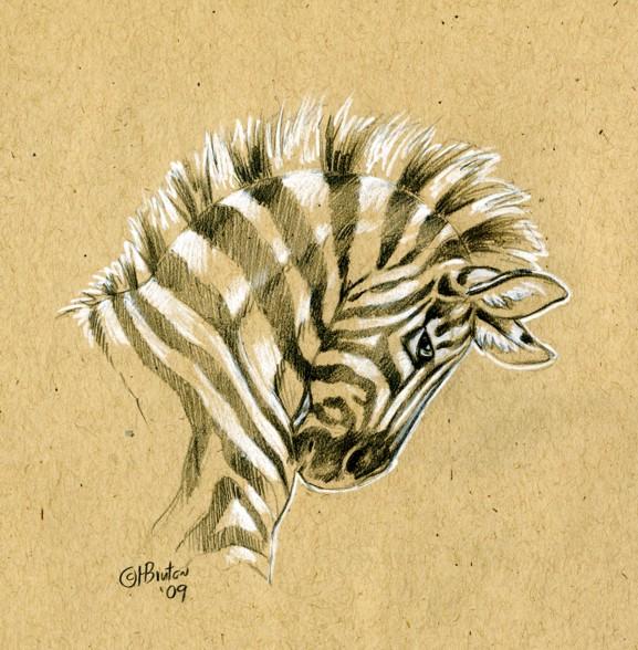 Brown Paper Zebra Sketch by Hbruton on DeviantArt