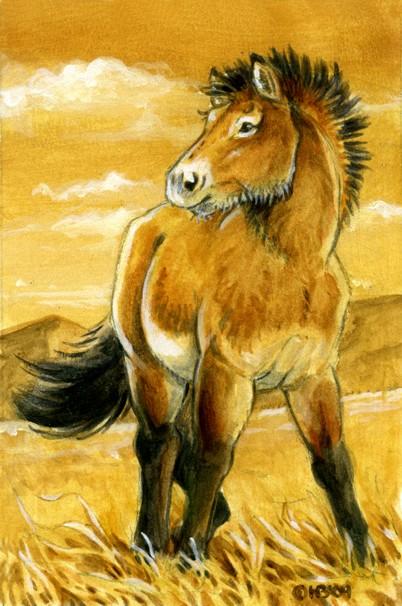 Przewalki's Horse by Hbruton