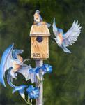 Bluebirds by Hbruton