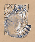 Pallas cat sketch