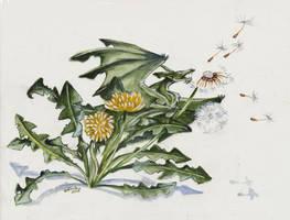 Dandelion Secrets by Hbruton