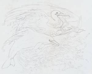 Water Phoenix pencils