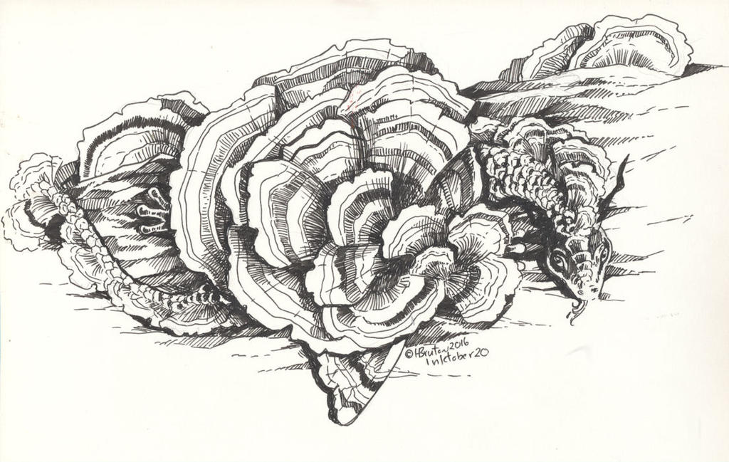 Fungus Secret Study:Inktober 20 by Hbruton