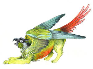 Green Cheeked Gryphon