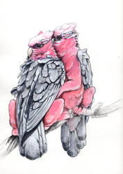 Rose Breasted Gryphons