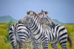 Noon Zebras