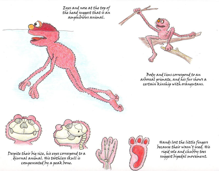 Elmo's Anatomy by Friggo-Glicker
