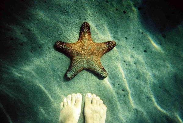 Hello Patrick by lomocotion