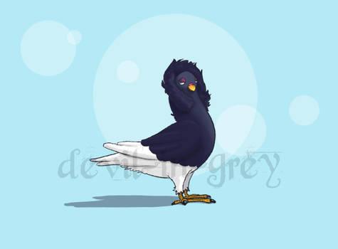 Lady Pigeon Study