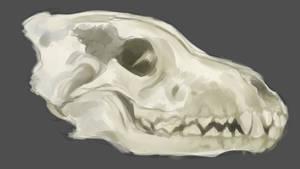Skull Study by Delkkat