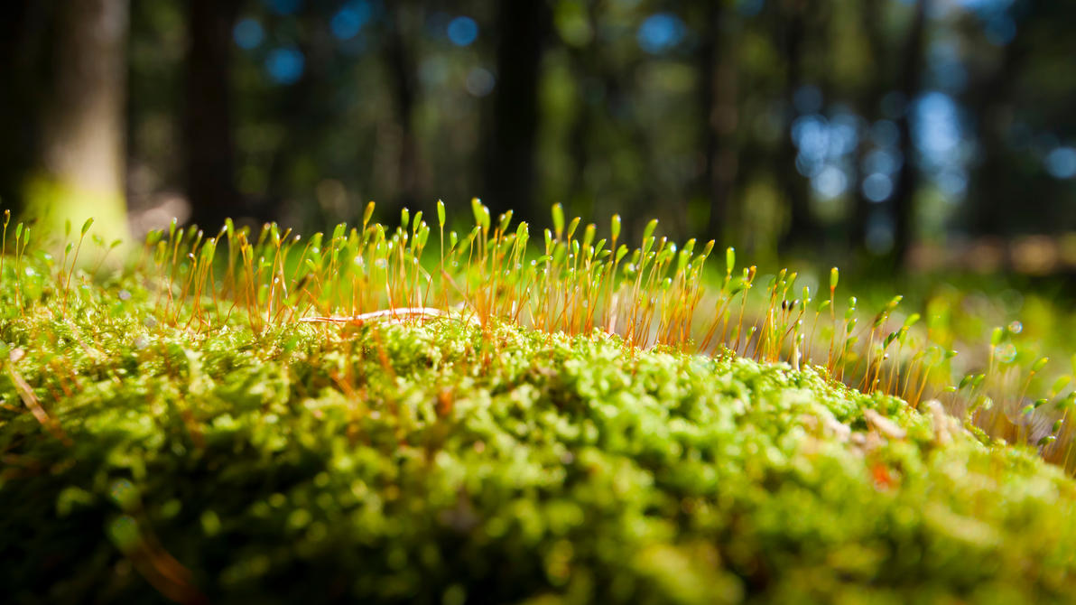 Moss by plangdon2