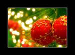 Christmas by semota