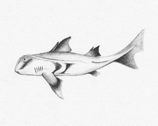 Fish Sketch by Niedziak