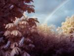 the rainbow chestnut