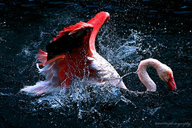 flamingo bath by evenliu