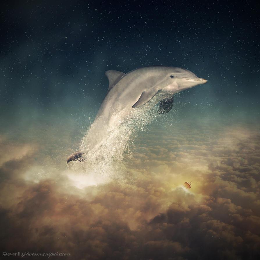 dolphin by evenliu