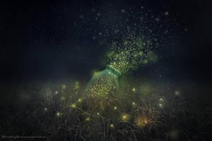 fireflies by evenliu