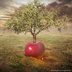 apple tree by evenliu