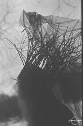 Crown of the woods by SerpentSapiens