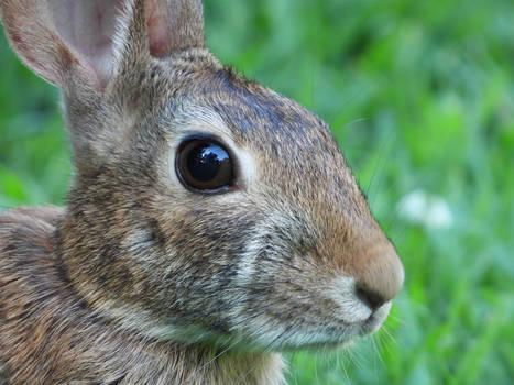 Bunny at 3000mm