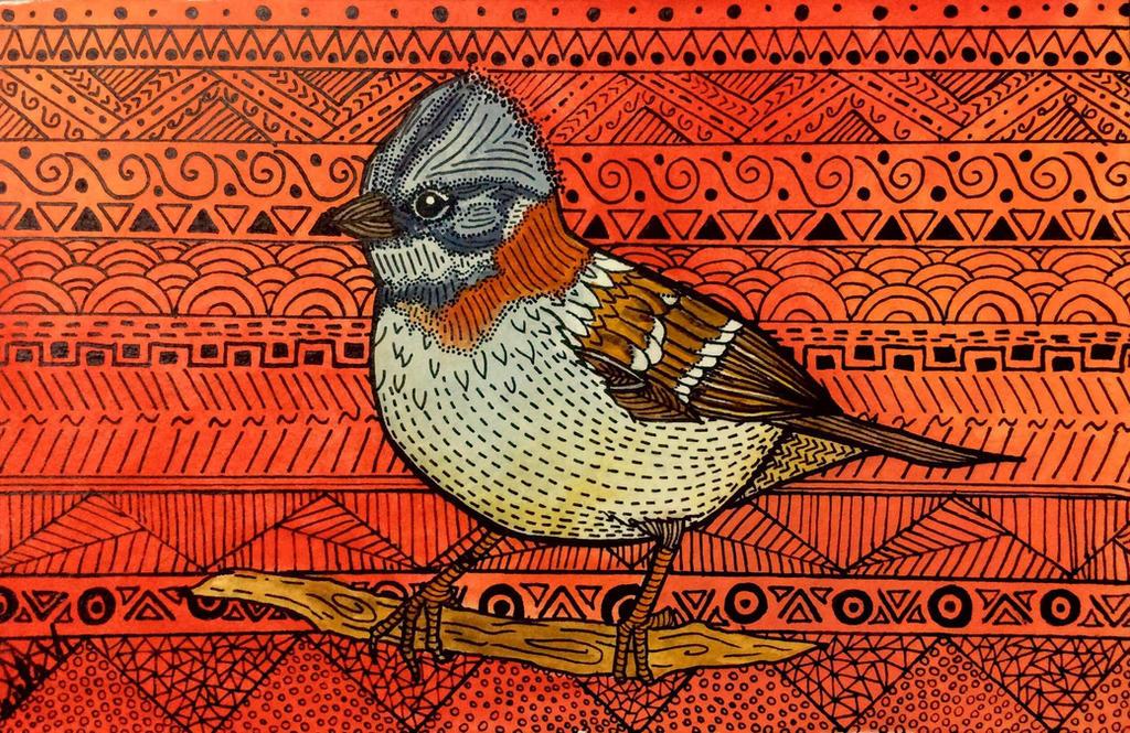 Chincol - Chilean Bird. by palimedusa