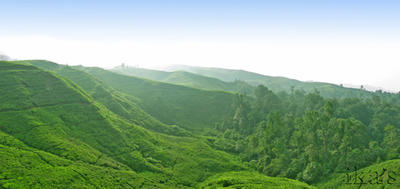 Nirmala Tea Plantation Landscape by motemanikabeads