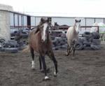 Sandy and Luna stock