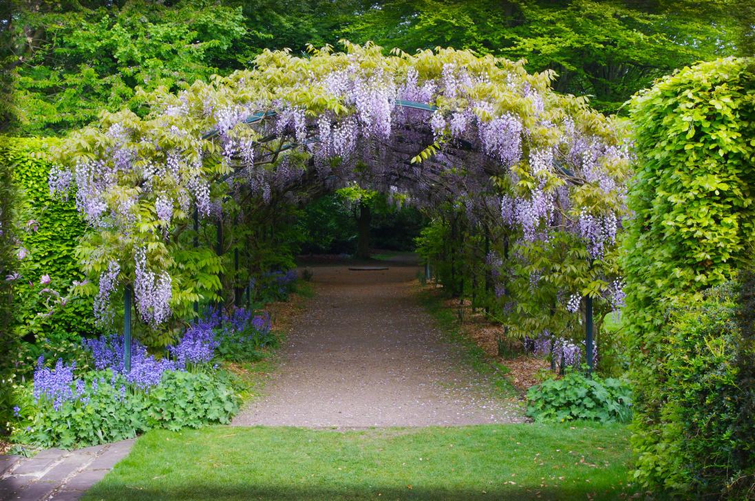 Wisteria Arch by seanw789