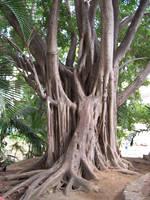 The Mighty Tree by DoodStock