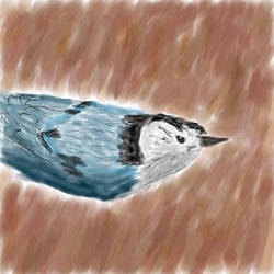 White-Breasted Nuthatch by Stiqe
