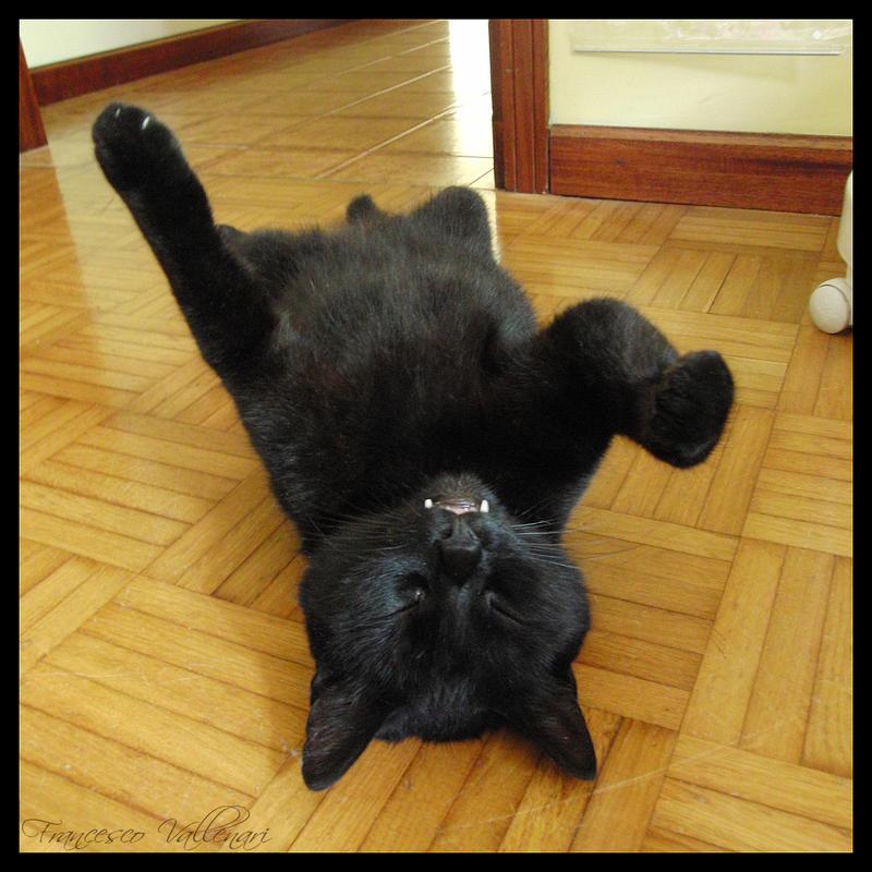 Pippo upside down