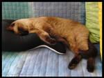 Miss sleeping on the seal by HoFattoSoloCosi