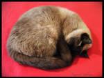 Miss, little ball of fur