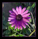 Purple flower by ameliasantos