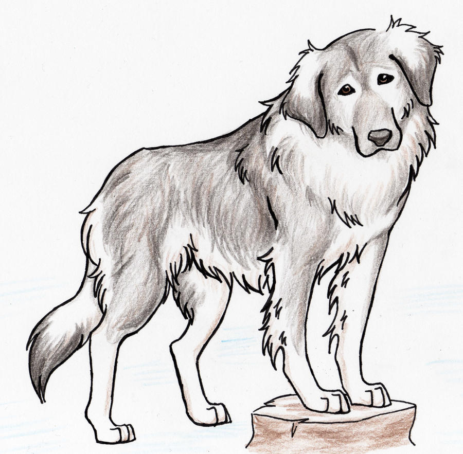 The gallery for --> Caucasian Mountain Dog Angry