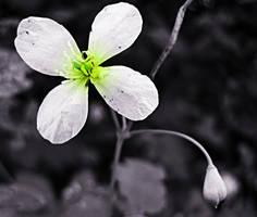 green beauty by Fotuna