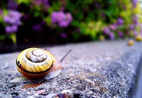 slug. by Fotuna