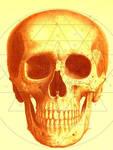 The Orange Skull