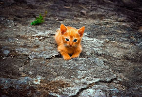 Lost Kitty by montag451