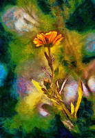The Marigold by montag451