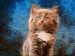 Proud Kitty