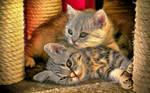 Kitty-Kitty!