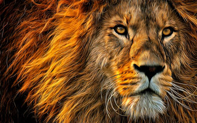 The Lion by montag451