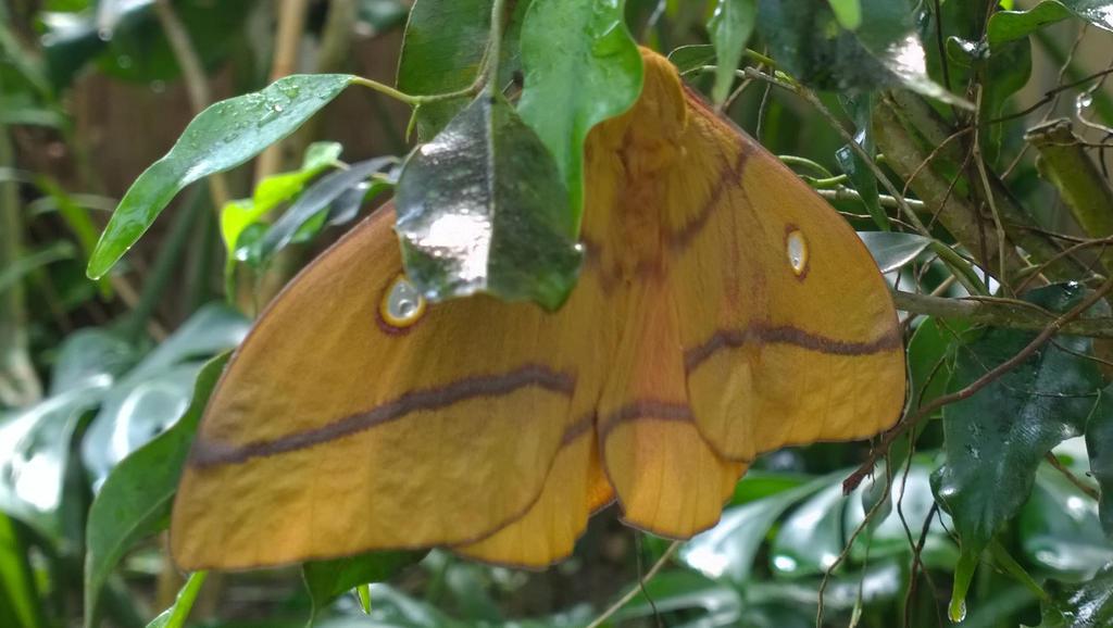 gelber Schmetterling by sunnight1