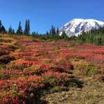 Autumn Mountain Flora